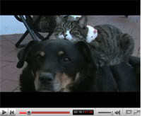 the dog, the cat and the rat